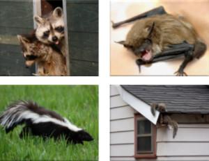 pesky critters