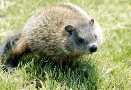 Wildlife Removal Westchester County New York Wildlife